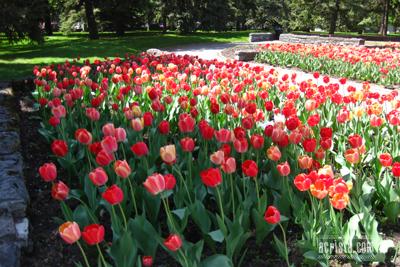 Montreal_BotanicalGarden_IMG_2724.jpg